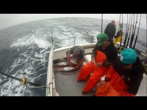 sportfishing on The Kahuna. Gill and gut in 42 seconds