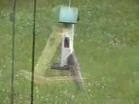 Stopping squirrels from eating at the bird feeder