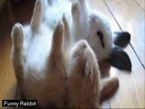 Funny Rabbit Jokes  ||  Rabbit Funny Gif  Video [HD]