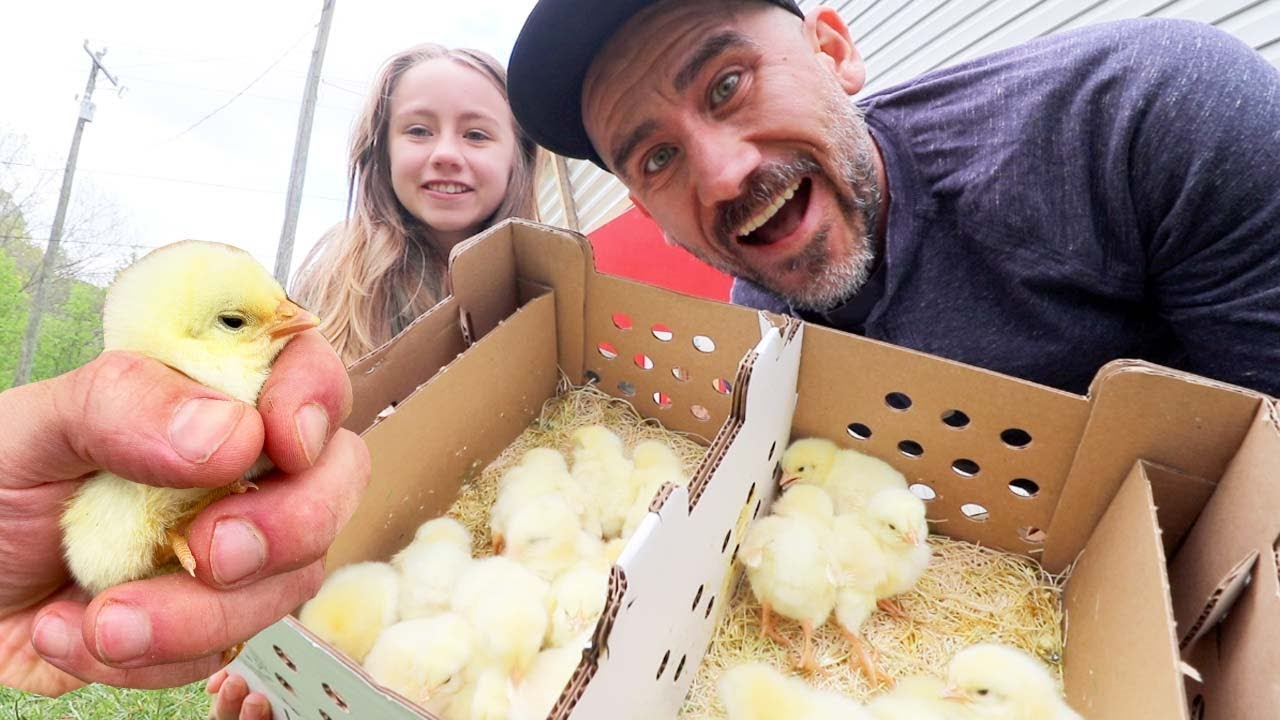 We are Now Ready After Five years of Raising Chickens