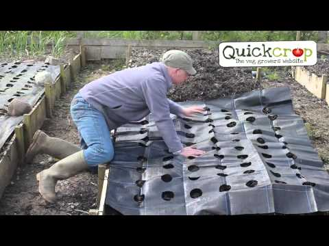 Growgrid Vegetable Mat and Weed Control