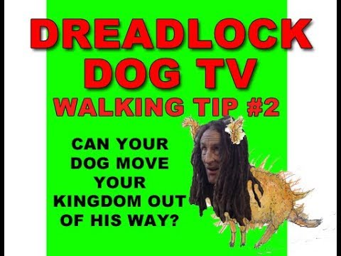 WALKING TIP #2 Can your dog move your kingdom out of his way?