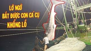 Lớ Ngớ Bắt Được Con Cá Mập Cụ Khổng Lồ Nặng 3000kg & Nhiều Cá Ngừ/ Catch The Giant Shark   #24