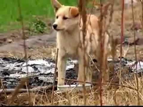 Loyal Dog Guards Grave Of Deceased Master