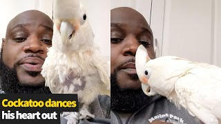 Cockatoo dances his heart out as New York vet beatboxes