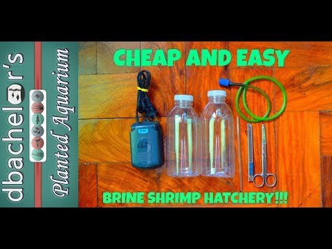 How to | DIY Brine Shrimp Hatchery