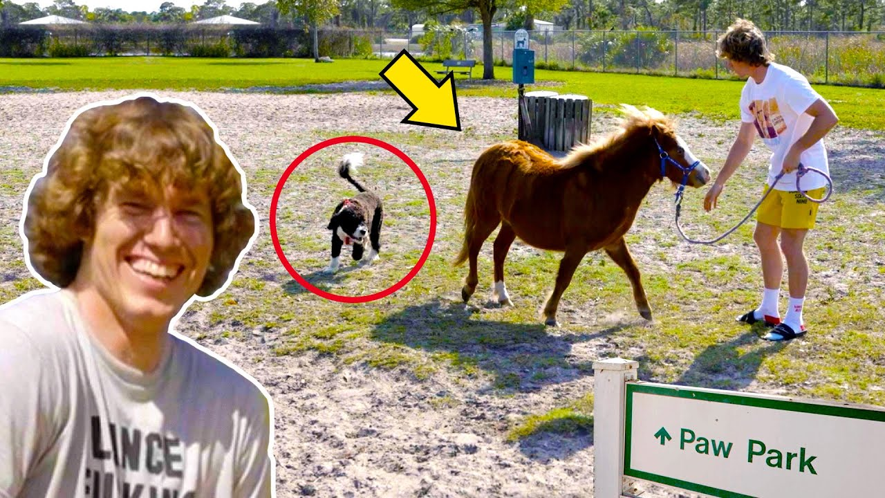 Taking Horse to a Dog Park!