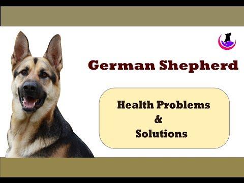 German Shepherd Health Problems II For Awareness Only II Hindi II