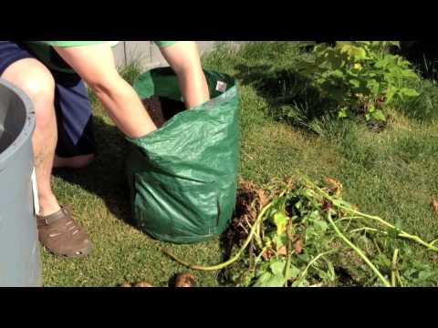 Do Potato Bags Work in the Alberta Urban Garden