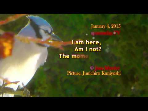 I AM HERE - 15 sec of realization! - 01/04/2015 - #quote #life #inspiration