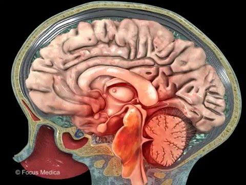 Neuroanatomy - Digital Anatomy Atlas