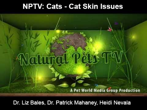 Natural Pets TV: Cats - Episode 6 - Cat Skin Problems - Why, What & How to Help