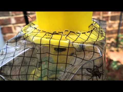 How to Catch Every Fly in the Neighborhood:  Big Bag Fly Trap