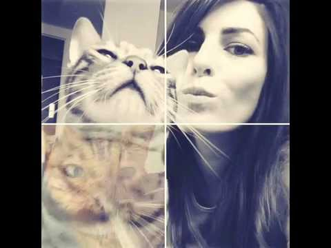 Cinepic Video Collage Cat Selfie