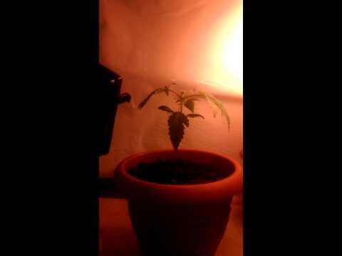 Mini Grow room pt1