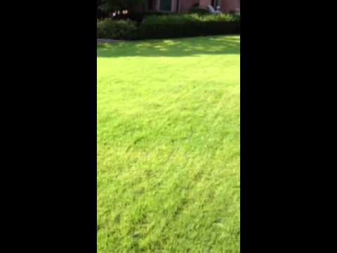 Zoysia grass lawn thick green Nashville Tn Tennessee