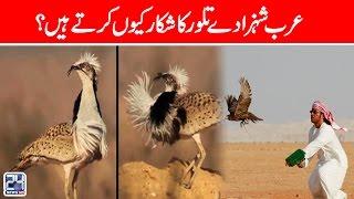 Why Arab Princes Hunt Houbra Bustards? | 24 News HD