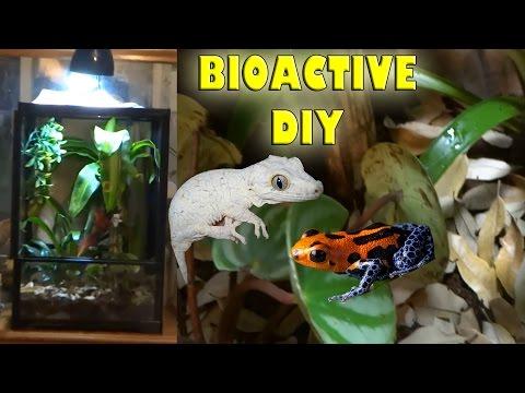 ♢ DIY Bioactive Terrarium♢