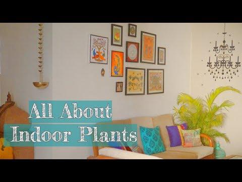 Best Indoor Plants | Easy To Grow Houseplants