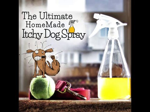 Itchy Dog Spray