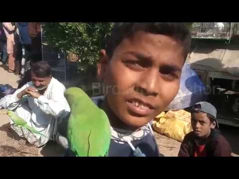Sunday korangi birds market visit only on PBI