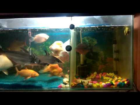 My fish growth very fast
