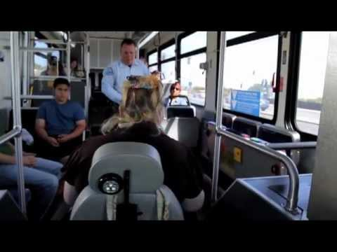 How to ride the Bus - General Public