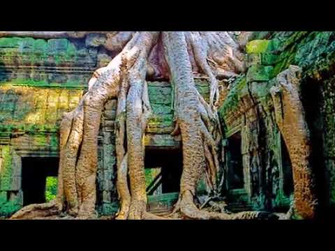 Lasers reveal 1,400 year old buildings hidden under Cambodian jungle Health News