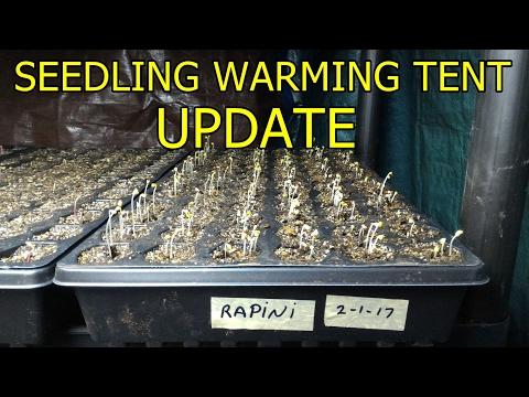 Seedling warming tent - update
