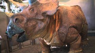Triceratops Discovery Trail at Jurassic Park in Universal Islands of Adventure