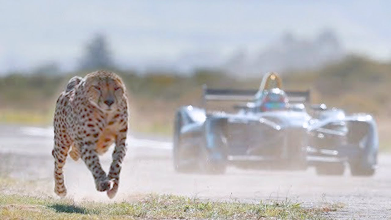 15 Fastest Animals On This Planet