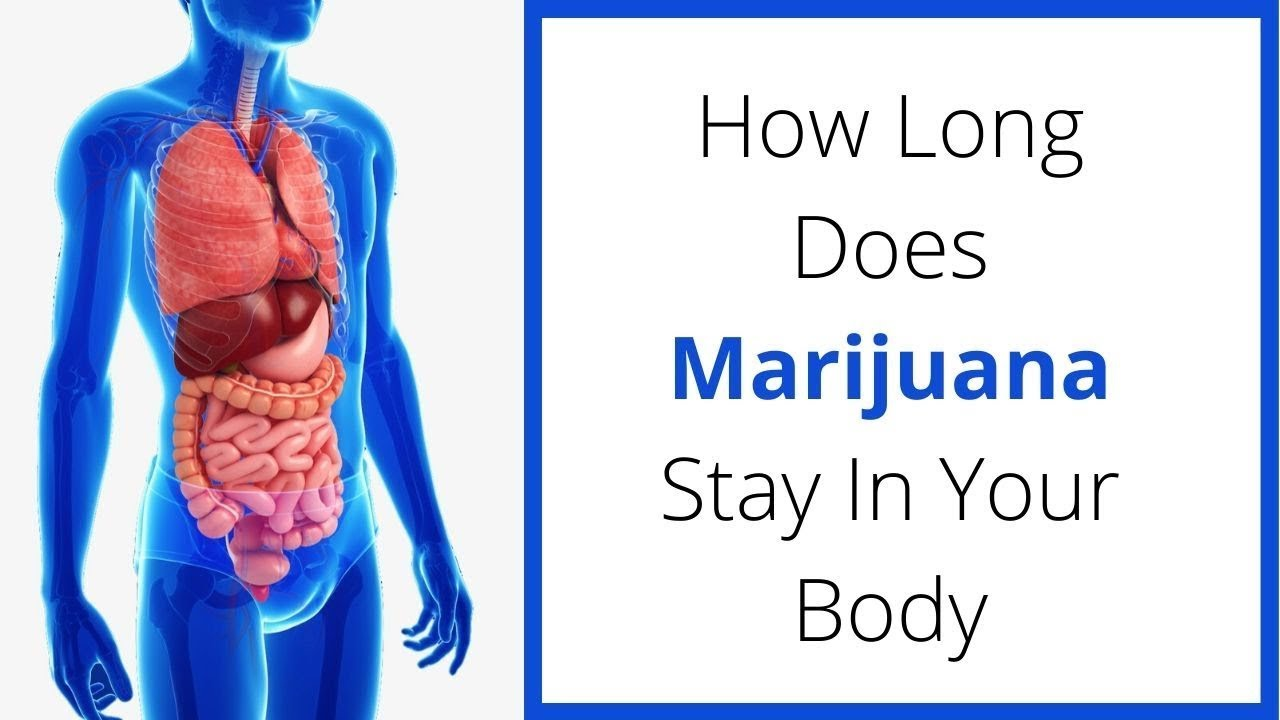 How Long Does Marijuana Stay In Your Body|How long does cannabis stay in your system | Weed Easy
