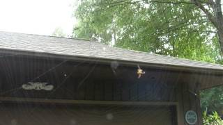 Download Spider weaving a web Video