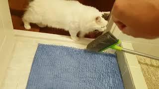 Download FLYING COCKROACH GETS EATEN BY FLOWERHORN FISH Video