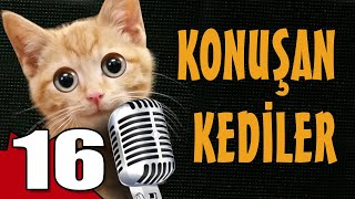 Konuşan Kediler 16 - En Komik Kedi Videoları