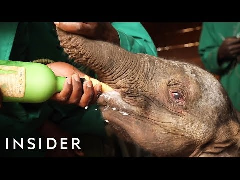 See Inside A Baby Elephant Orphanage That Save African Elephants