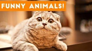 Top 100 Funny Pets on Vine   Cute Animal Videos 2017