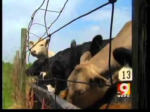Tracking system helps prevent Mad Cow