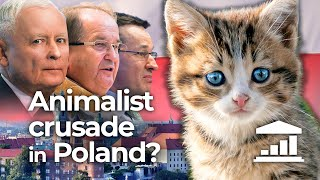 Poland: Could ANIMAL rights BRING DOWN the GOVERNMENT? - VisualPolitik EN