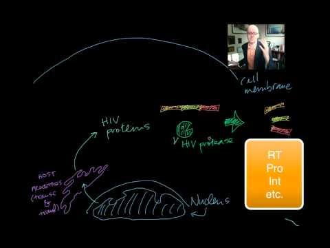 HIV Life Cycle and Drugs [UndergroundMed]