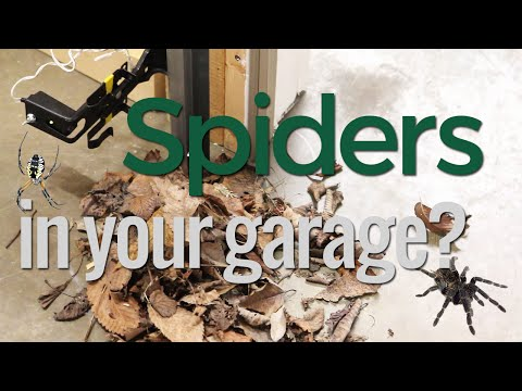 How to Keep Spiders out of Your Garage