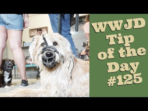 What Do you Want? What Would Jeff Do? Dog Training Tip of the Day #125