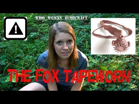 The Foxtapeworm - A dangerous parasit- Vanessa Blank - Wild Woman Bushcraft