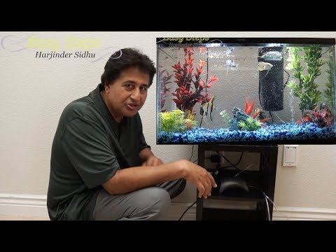How To Set Up A Small Fish Tank | Sheru & Bruno Got New Friends