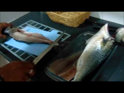 Filleting and Cooking Tailor (bluefish)