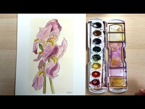 How to Draw and Paint an Iris with Watercolor