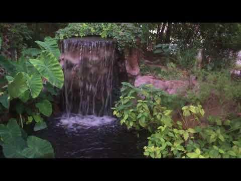 Super cool Back yard koi pond oasis Quick walk around. Many years of hard work.