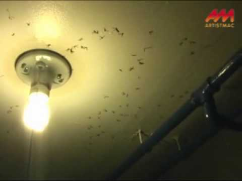ATTACK OF THE FLYING ANTS!