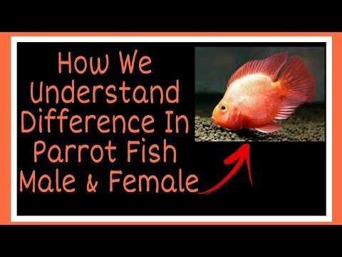 What Is The Difference In Parrot Fish Between Male And Female