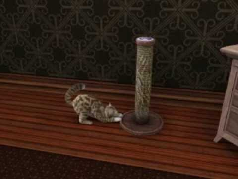 The Sims 3 Pets | Kitty Using Scratching Post